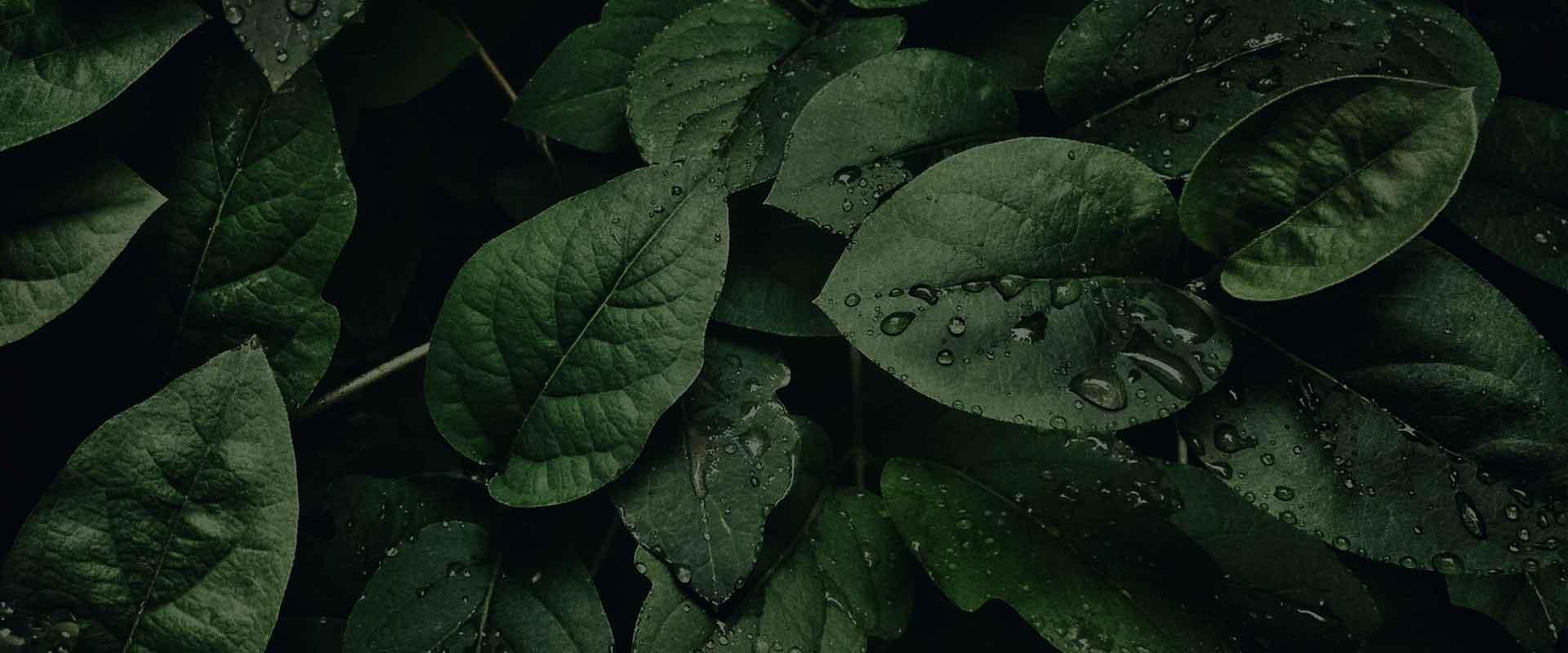 hero-rain-on-leaves