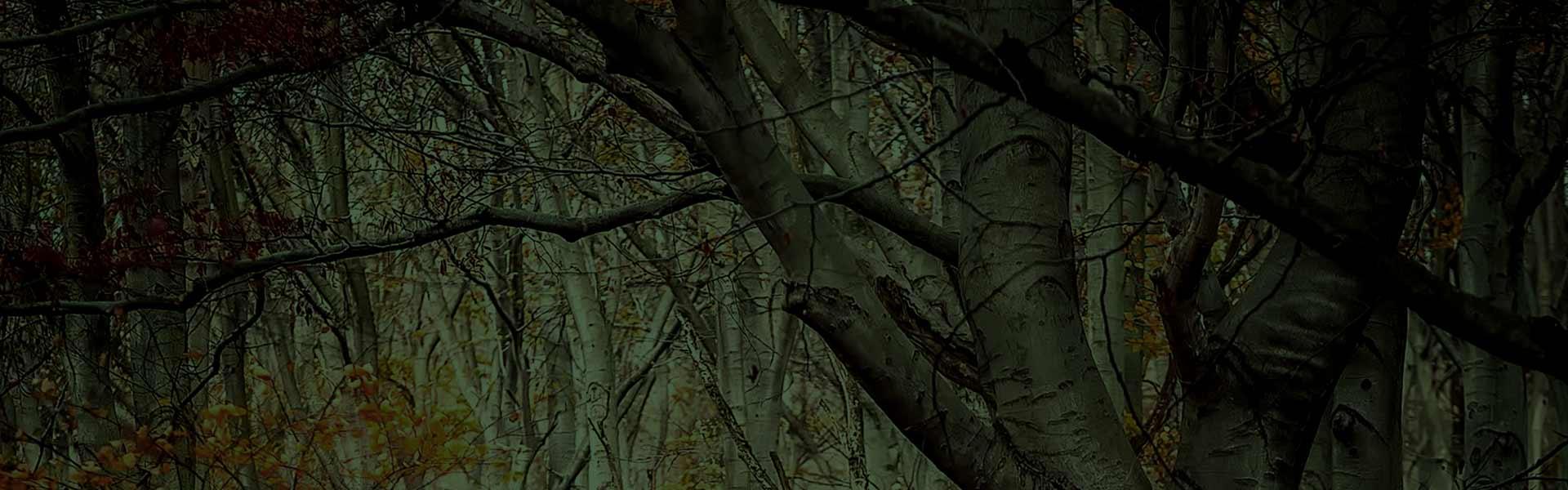 hero-woods