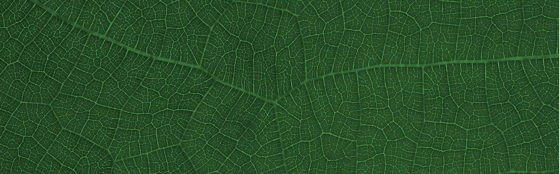 leaves-texture-bg-3