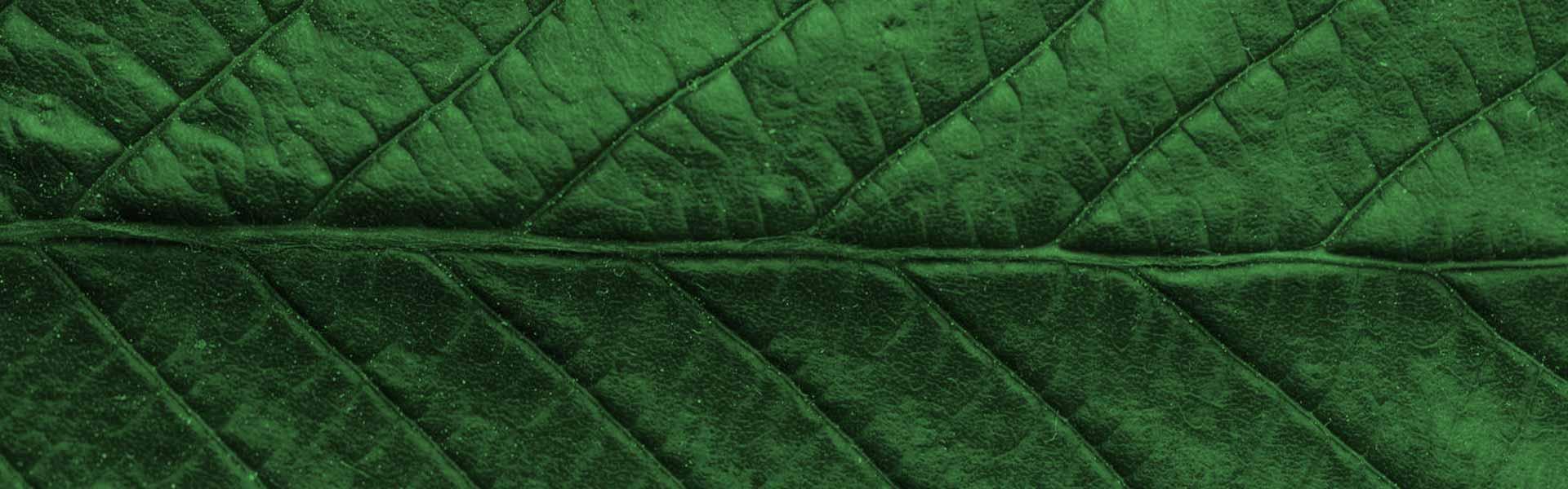 leaves-texture-bg-4