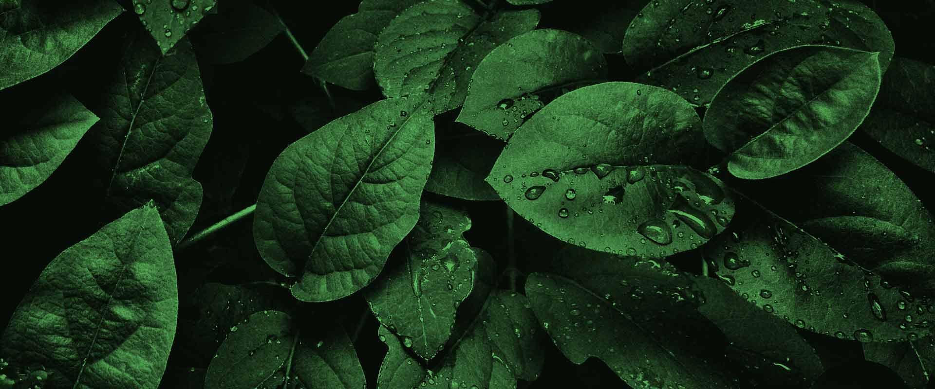 leaves-texture-bg