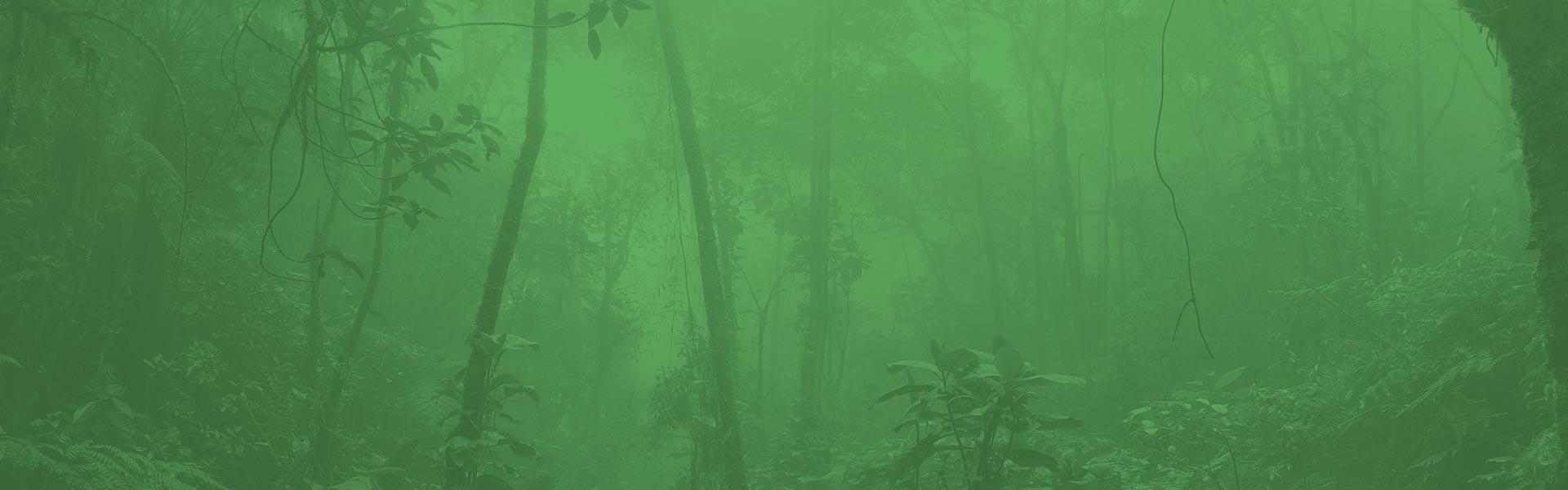 trees-bg-overlay